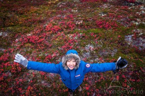 Até o mato fica lindo no outono norueguês