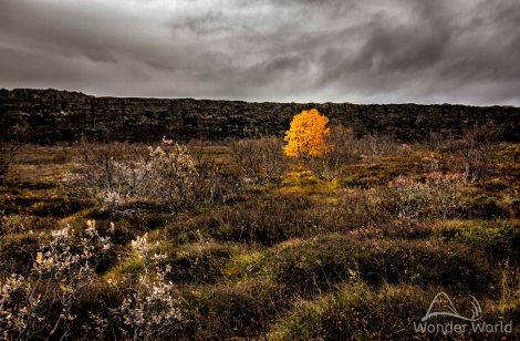 Uma árvore que resistia bravamente ao fim do outono